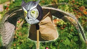 Scare Birds Away from Gardens, Docks with Prowler Owl