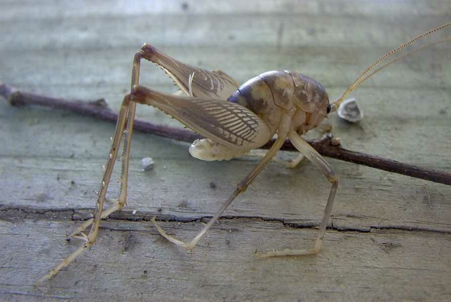 camel crickets lease house safe northern virginia virginia va