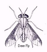 how to kill deer flies