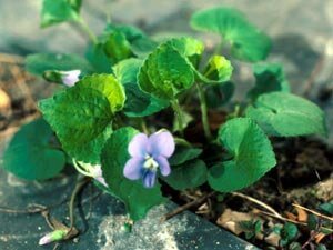 Kill Tough Weeds With Image Herbicide Weed Killer